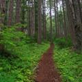 Lush greenery surrounding the trail.- Pechuck Lookout