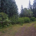 Trail junction with an old logging road, complete with hitching post.- Pechuck Lookout