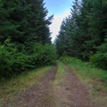 Trail junction with logging road.- Pechuck Lookout