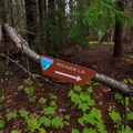 Helpful directional sign at the trail/logging road junction.- Pechuck Lookout