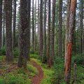 The serene, forested trail through the Table Rock Wilderness.- Pechuck Lookout
