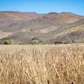 Wetlands grasses.- Wetlands Loop