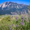 Scenic views of the Sierra from the park's South Loop Trail.- Washoe Lake State Park