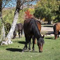 The area's feral horses are frequent guests of the park, seen here in the day-use picnic area.- Washoe Lake State Park