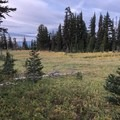 Open meadows to start the day.- Mount Adams Circumambulation