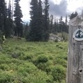 The Pacific Crest Trail runs along portions of the circumambulation.- Mount Adams Circumambulation