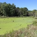 One of three wetlands seen on the Friends' Wetland Trail.- Potato Creek State Park