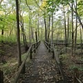 Wooden platform crossing along Trail 3, one of the most popular hikes in the park.- Potato Creek State Park