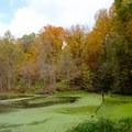 Autumn leaves reflecting over the wetlands.- Potato Creek State Park