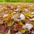 Autumn is one of the best times to visit the park because of the beautiful autumn leaves.- Potato Creek State Park