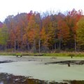Wetlands Trail offers beautiful views of wetlands and forests.- Potato Creek State Park