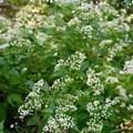 Flowers seen along Trail 3.- Potato Creek State Park