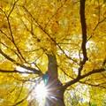 Sun shining through the beautiful autumn trees in Potato Creek State Park.- Potato Creek State Park