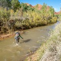 One of many crossing of the Escalante- Silver Falls Creek / Choprock Canyon Loop