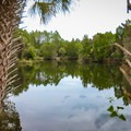 The freshwater pond at Mullet Hole.- Crystal River Preserve State Park