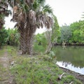 Hiking along a tributary of the Crystal River.- Crystal River Preserve State Park