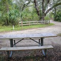 A typical site has a bench and fire pit, food hook, and water and electricity hook ups.- Lake Griffin State Park Campground