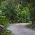 The lush foliage grants a certain degree of privacy between neighboring sites.- Lake Griffin State Park Campground