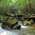 Light filtering through the canopy highlighting the beautiful Conasauga River.- Conasauga River Trail