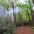 Campsite at the Panther Creek Trail intersection.- Conasauga River Trail