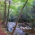Trail meandering along the Conasauga.- Conasauga River Trail