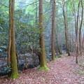 Trees stand guard along the Conasauga.- Conasauga River Trail