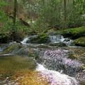 Another river crossing through the Conasauga.- Conasauga River Trail