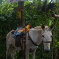 Local working animals can be seen on the road up up to Mundo Nuevo.- Mundo Nuevo to Pozo Azul to Minca Loop