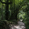 The bamboo dwarfs everything.- Mundo Nuevo to Pozo Azul to Minca Loop