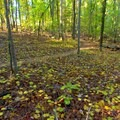 Trail meandering through the woods.- Laurel Ridge Trail
