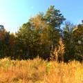 Change of colors under the power lines.- Laurel Ridge Trail