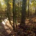 Boardwalk over a damp area.- Laurel Ridge Trail