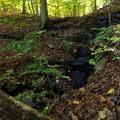 Water seeping down rocks.- Laurel Ridge Trail