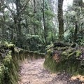 Several sections on the trail are cut out of the dirt to create mossy walkways.- Cerro Chirripo