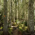 Classic temperate rainforest common to the park. - Garibaldi Provincial Park