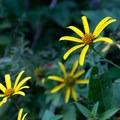 Wildflowers adorn the park. - Shawnee State Park