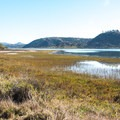Batiquitos Lagoon is one of the few remaining coastal wetlands in Southern California.- Batiquitos Lagoon Trail