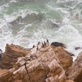 Cormorants along the coast. - Namib Desert Driving Tour