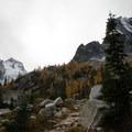 The sub alpine trees just beneath the hut.- Conrad Kain Hut