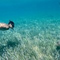 Swimming with a nurse shark.- Belize Barrier Reef System