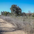 Carbon Canyon Regional Park's recreational opportunities lie just across the creek bed from the trail.- Redwood Grove Trail