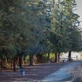 The redwood trees' presence makes the grove significantly more shady and cooler than the surrounding area.- Redwood Grove Trail