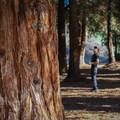 Brea's Carbon Canyon Regional Park redwood grove.- Redwood Grove Trail