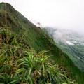 Cloud-covered Ko'olau Summit Trail looking down toward Waimanalo on the east side of O'ahu.- Kuliouou West Loop