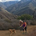 This is a dog-friendly trail.- Bedford Peak