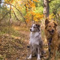 The trail is dog friendly.- Sitton Peak