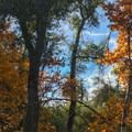 Fall color and blue sky.- Sitton Peak