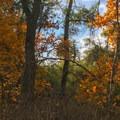 Fall color along the trail to Sitton Peak.- Sitton Peak