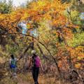 Hiking the trail to Sitton Peak.- Sitton Peak