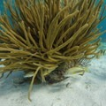 Photographer John Romero: Coral and fish- Belize Barrier Reef System